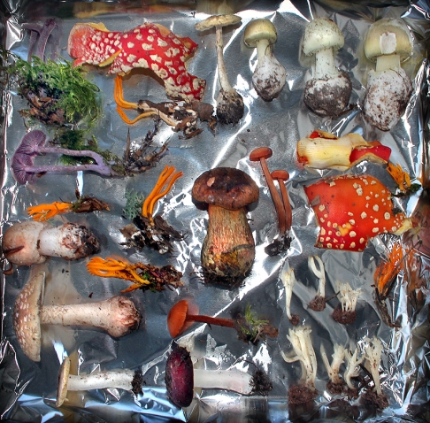 Fungi and Moss II
