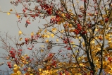 Autumn in Dresden Dölzschen