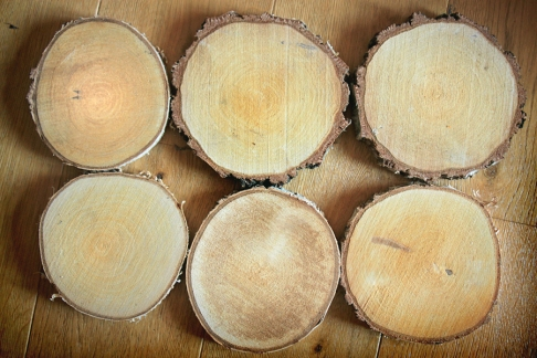 Birch wood slices to be pyrographed