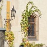 Castle Café Window