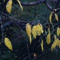 Cherrytree, Nov 2014