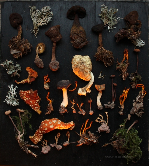 Fungi collection, 2013
