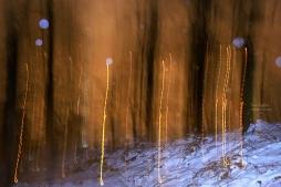 Tree Lights/Way Home