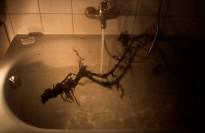 Root Bath