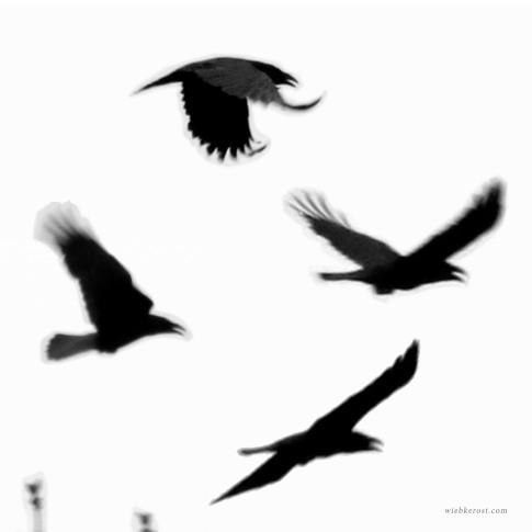 Raven flight II