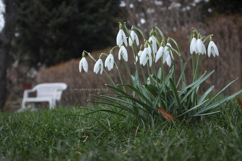 Snowdrops and Garden Bench