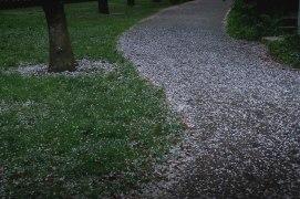 Path of Petals
