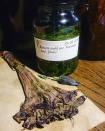 Datura tincture, Aug. 2017