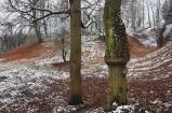 Bienertpark im Winter