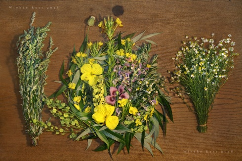 herbal correspondences   Wiebke Rost